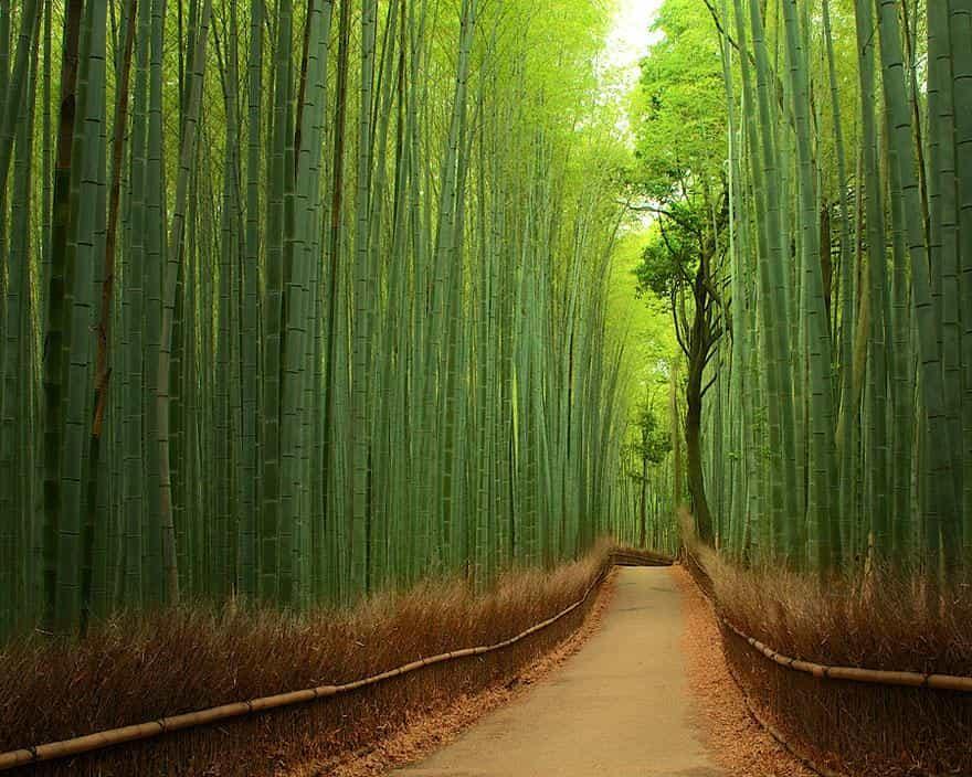 Бамбуковая роща 1