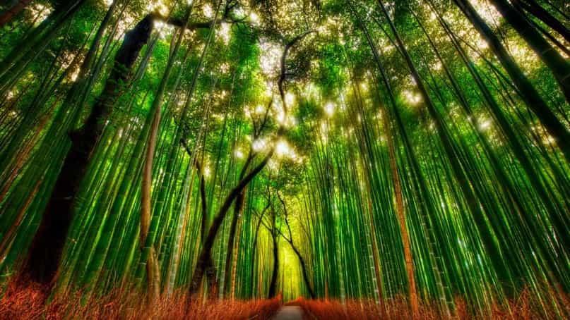 Бамбуковая роща 3