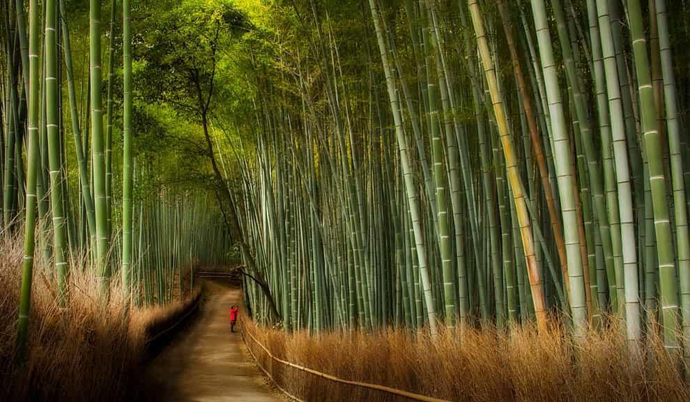 Бамбуковая роща 6