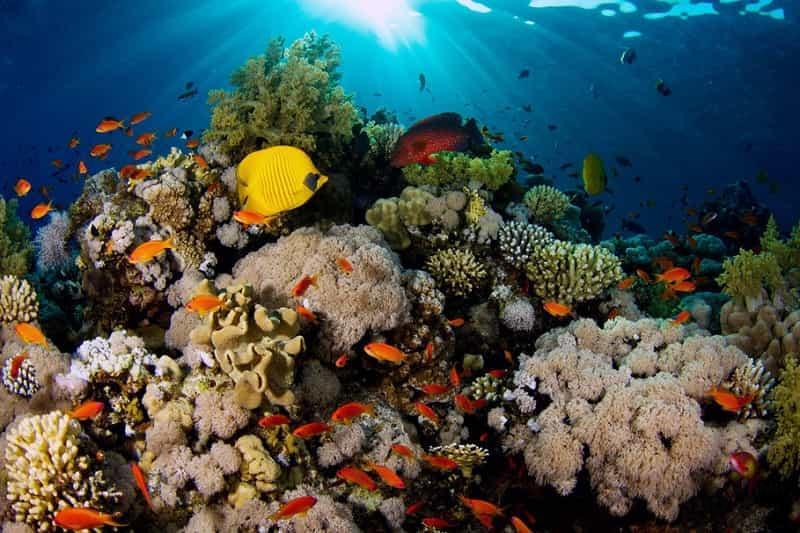 Большой Барьерный риф 10