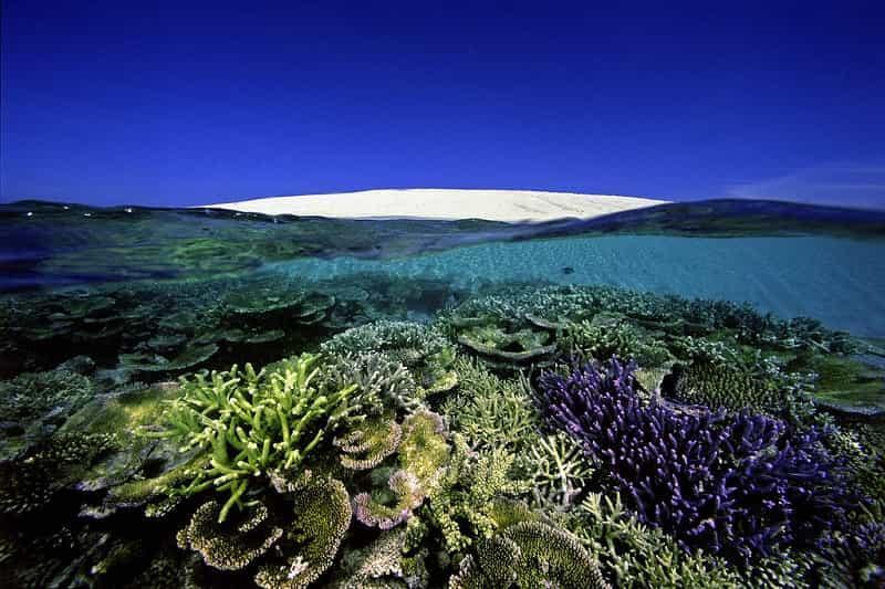 Большой Барьерный риф 4