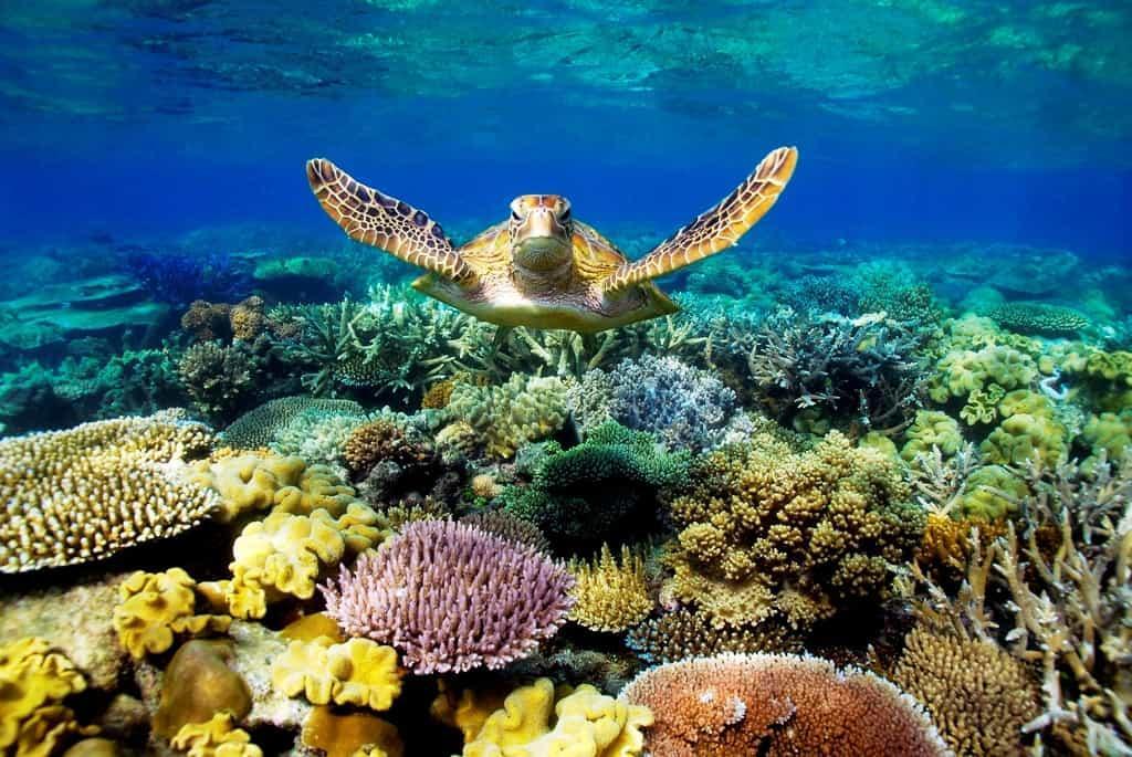 Большой Барьерный риф 6