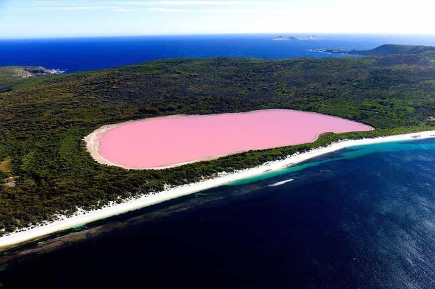 Розовое озеро Hilier 1