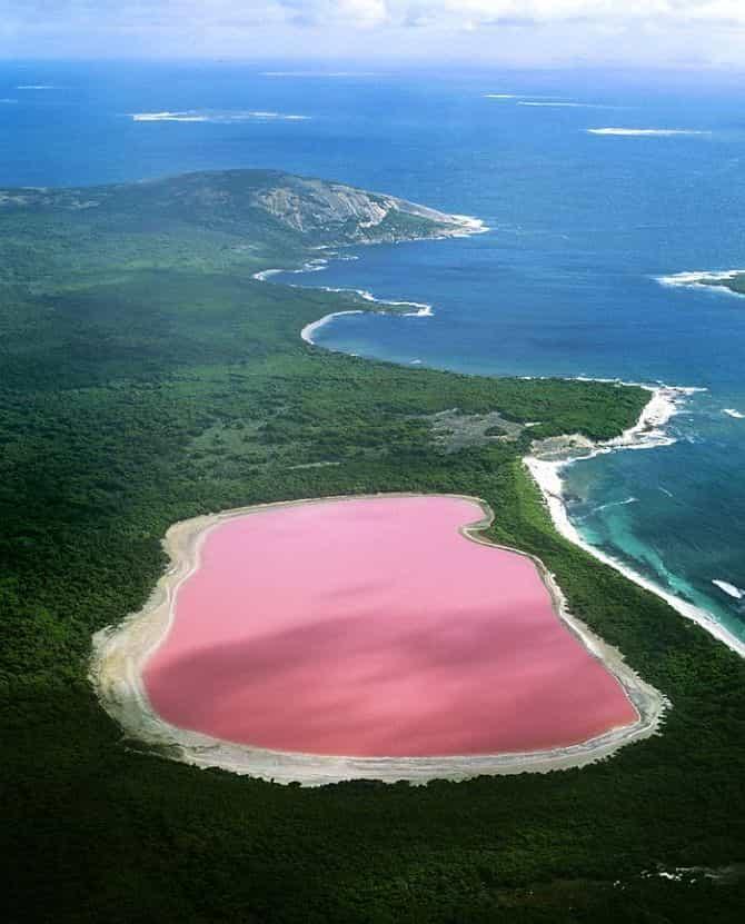 Розовое озеро Hilier 5
