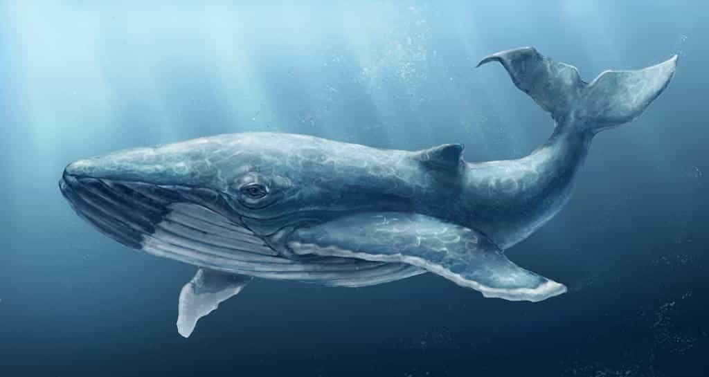 Картинки с китами, фото