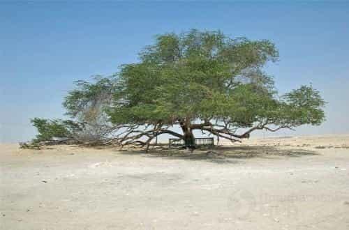 Самые фантастичные деревья мира
