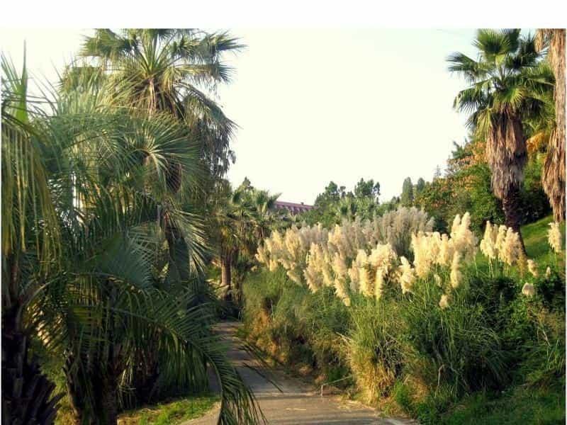 пальмовые кустарники растут сочи фото в дендрарий также можете установить