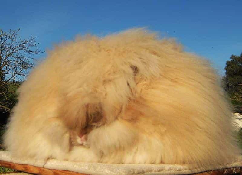 Самые необычные животные. Ангарский кролик
