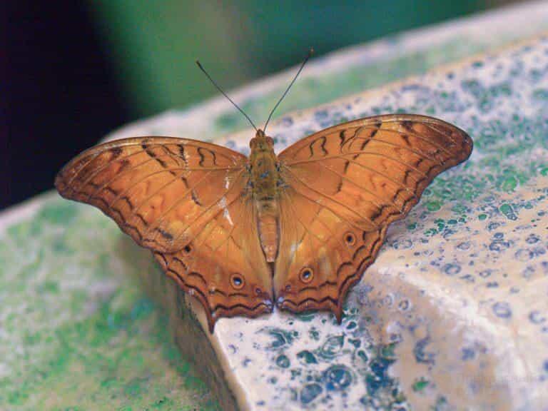 Одна из бабочек в парке