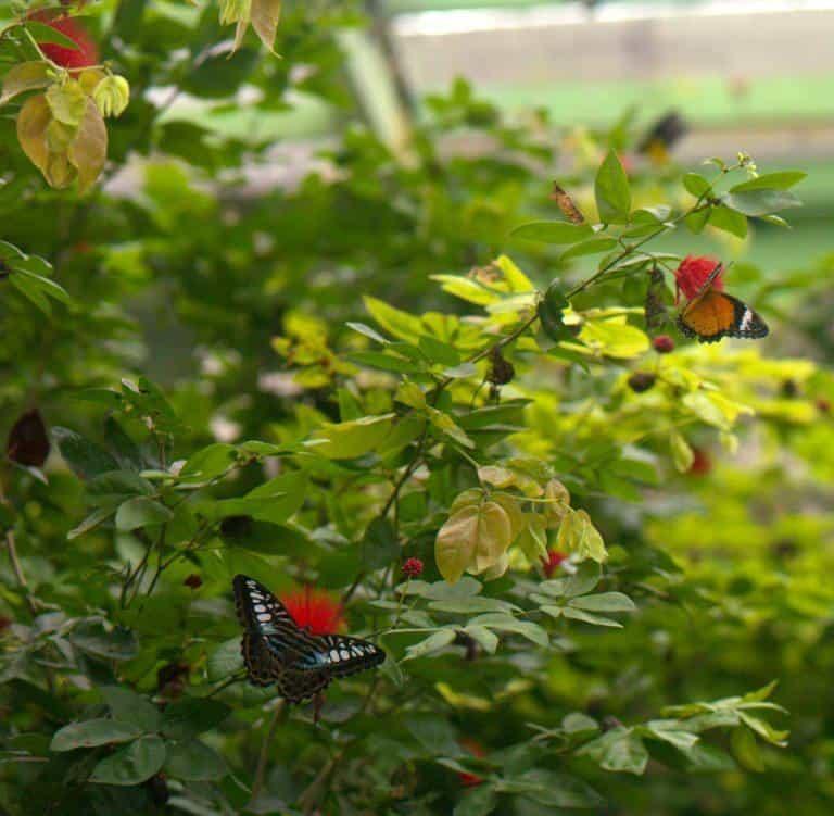 Бабочки в парке бабочек на Пенанге