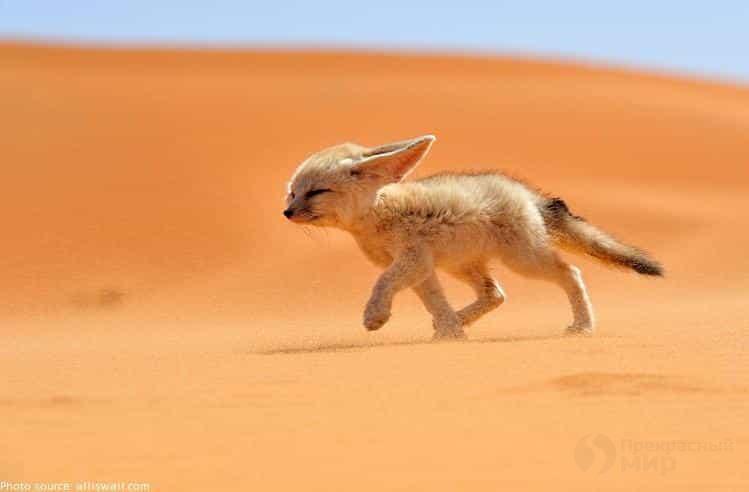 Какие животные живут в пустыне список