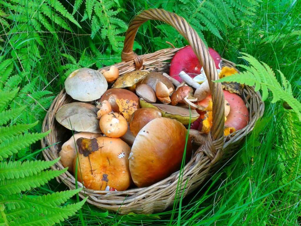 Картинки лукошко с грибами, прикольные картинки картинки